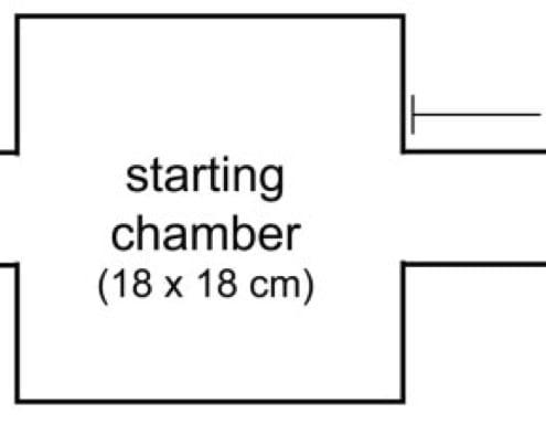 Two arm maze diagram
