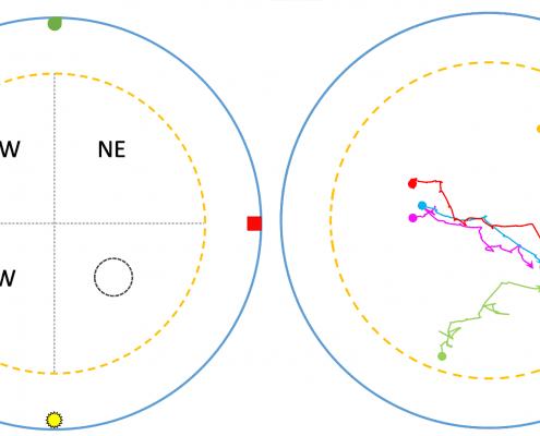 Water maze diagrams